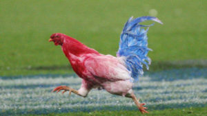 Picture of Gallic Rooster