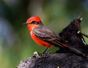 Robin Pics