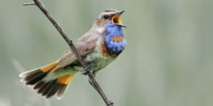 Nightingale Picture