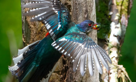 national bird of Mozambique