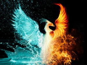 picture of Phoenix