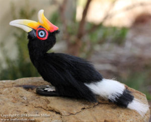 picture of Rhinoceros hornbill