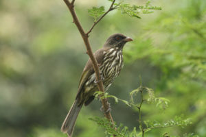 Palmchat Picture