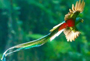 Quetzal Pics