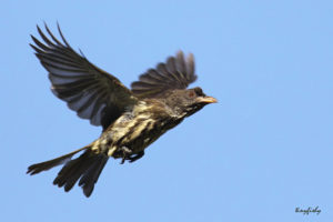 picture of Palmchat