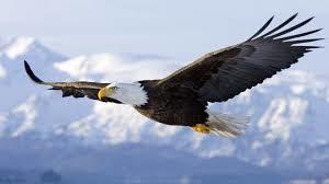 picture of White Eagle