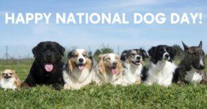 World Dog Day August 26